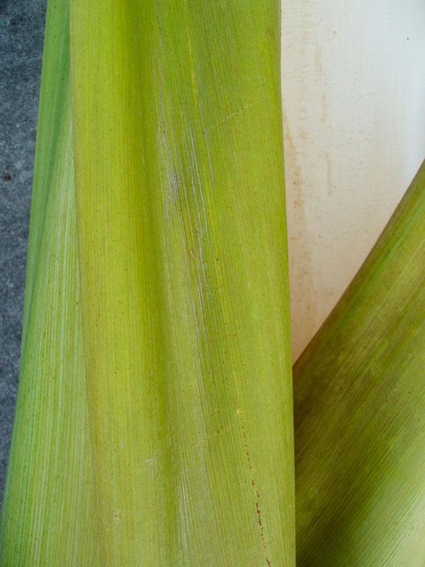 Palm Leaf VII