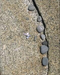 Stone Curve