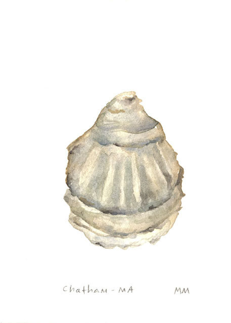 Original Watercolor Painting of Oyster by Megan McCutcheon